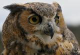 Roofvogelshow - Bird of Prey show