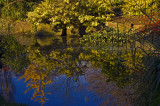 Late Autumn, Cheltenham