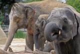 elephant / olifant 20060731028