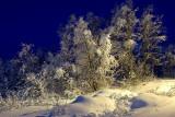 Nature 80.jpg