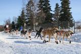 Iditarod37_Anc_07Mar2009_ 023.JPG