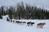 Iditarod37_Willow_08Mar2009_ 109.JPG