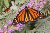 Butterfly_27Aug2007_ 051acesc.jpg