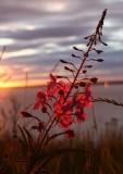 PTWoronzof_Sunset_21Jul2006_ 016w.jpg