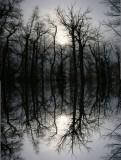 Reflection_TurnagainArmTrail_Reflection_05Feb2006_ 001.jpg