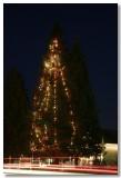 Old Town Elk Grove Christmas Tree