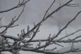 Winter Storm in Okarche - January 28/29, 2010