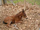 Dolly born March 19, 2009