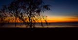 Sunset through Casurina
