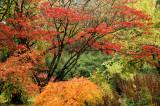 Autumn River Garden