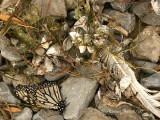 Detritus at Presqu'ile Provincial Park  S7 #4708