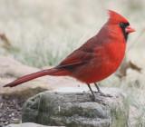 4256 N Cardinal m.JPG