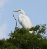 8296 Great Egret