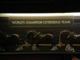 Budwieser Clydesdale team