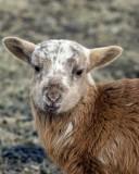 Lamb 2010_8866