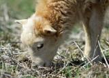 Lamb_9150