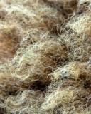 Wool_10923
