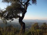 Romanya de la Selva.Serra de les Gavarres