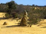 The Pinnacles.Crocodile