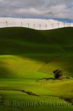 228 Altamont Pass Wind Farm 2.jpg