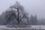 228 Twilight snow Yosemite.jpg