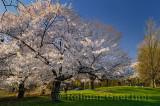 235 Cherry Blossom Park.jpg