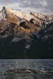 141 Lake Minnewanka Seagull 2.jpg