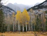 144 Sawback Range Yellow Aspen .jpg