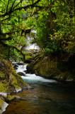 158 Jungle waterfall 2.jpg