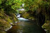 158 Jungle waterfall 3.jpg