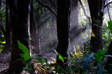 162 Rain Forest Morning light.jpg