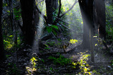 163 Rain Forest Morning light 2.jpg