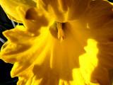 In The Sun ~ April 8th