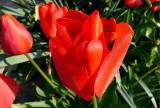 Dewed ~ April 26th