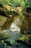 Chapter 9 - Freshwater Wetlands