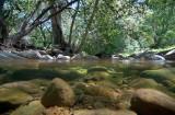 Chapter 9 Picks - Freshwater Wetlands