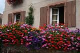une maison fleurie