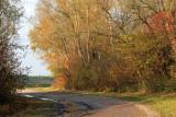Rhine forest 2009