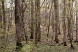 april forest
