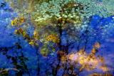 reflets d'automne et de printemps.