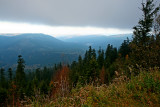 la forêt du Donon