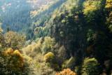 la forêt du Nideck