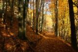 golden forest.