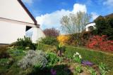 spring in my garden.
