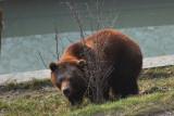 Gallery: Bears