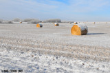 Snow Covered Bales
