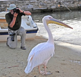 Son John Photgraphing Pelican Petros III