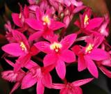 Orchids, -36-