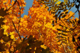 Lovely Orange Leaves