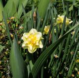 Lovely Yellow Flower